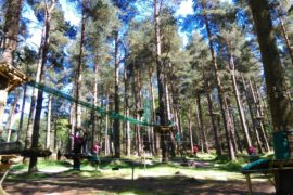 Tibradden Wood Tree Adventure Park